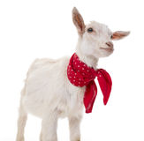 A funny goat. On a white background Stock Photo