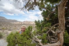 Funny, goofy blonde woman hides in the bushes near a juniper tree in Red Rock Canyon Conservation area in Nevada. Funny, goofy blonde woman hides in the bushes royalty free stock photos