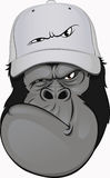 Funny gorilla in a baseball cap Stock Photography