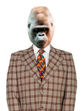 Funny Gorilla Businessman, Suit and Tie, isolated. A funny gorilla businessman is dressed in a goofy plaid suit and tie. The ape has a serious look on his face Royalty Free Stock Images