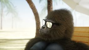 Funny gorilla in glasses lies on a deckchair. Beach and palms. Spa, resort concept. Realistic 4K animation.