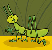 Funny grasshopper Stock Images