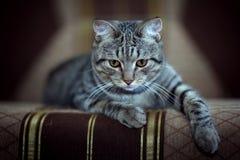 Funny gray cat on a sofa. Sad Royalty Free Stock Photos