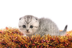 Funny gray kitten on new years tinsel Stock Photography