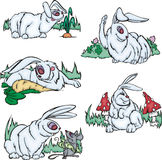 Funny gray rabbits Royalty Free Stock Photography