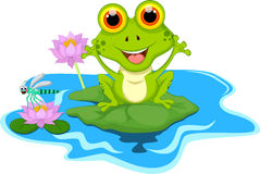 Free Funny Green Frog Sitting On A Leaf Stock Images - 69217074