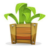Funny Green Plant In Wood Bucket Royalty Free Stock Photography