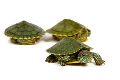 Funny Green Turtle Royalty Free Stock Images
