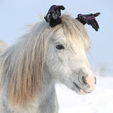 Funny grey pony with glowes in winter Royalty Free Stock Photo