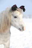 Funny grey pony with glowes in winter Stock Photos