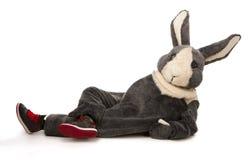 Funny grey rabbit Stock Photos
