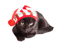 Funny Grumpy Christmas Kitten Royalty Free Stock Images
