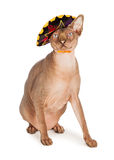Funny Hairless Cat in Sombrero. A funny hairless Sphinx breed cat with a mad expression wearing a Mexican sombrero royalty free stock images