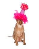 Funny Hairless Cat Wearing Birthday Hat royalty free stock photo