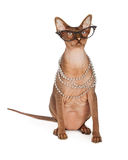 Funny Hairless Cat Wearing Glasses Stock Photo