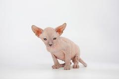 Funny hairless sphynx kitten on white background Stock Images