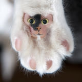 Funny hairy cat pad with face Stock Photos