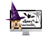 Funny Halloween dog peeping inside monitor pc  witch hat isolated. Funny Halloween dog peeping inside monitor pc with celebration theme wearing witch hat Royalty Free Stock Images