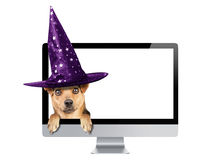 Funny Halloween dog peeping inside monitor pc witch hat isolated. Funny Halloween dog peeping inside monitor pc wearing witch hat isolated Royalty Free Stock Images