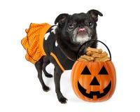 Funny Halloween Dog With Treats royalty free stock photos