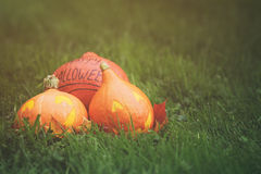 Funny halloween pumkins on grass Stock Images
