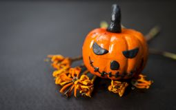 Funny Halloween pumpkin on black background Stock Images