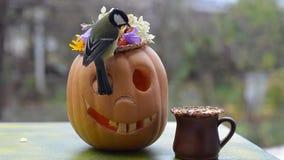 Funny Halloween pumpkins in the garden feeding birds