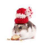 Funny hamster Royalty Free Stock Photography