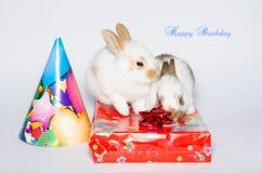Funny happy birthday card with rabbits Stock Photo