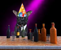 Funny Happy Birthday Party Dog, Drinking, Alcohol. Happy birthday and new year! Funny party dog is drinking booze and alcohol and is drunk. The pet animal is royalty free stock photo