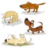 Funny happy dogs Stock Photos