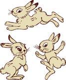 Funny Hares Stock Photos