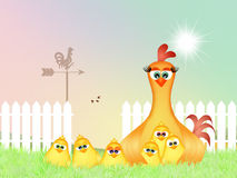 Funny hen in the nest Royalty Free Stock Photos