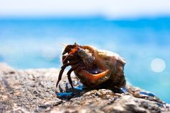 Funny hermit crab Stock Images