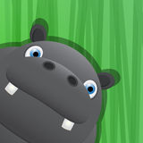 Funny hippo avatar icon Royalty Free Stock Photos