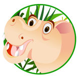 Funny hippo cartoon Royalty Free Stock Image