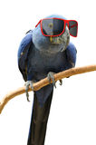 Funny hipster parrot wearing cool red sunglasses Stock Photo
