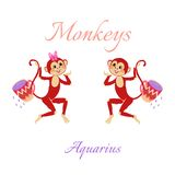 Funny horoscope with cute monkeys. Zodiac signs. Aquarius. Stock Image
