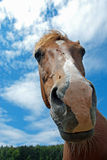 Funny horse Stock Photos