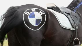 Funny horse with BMW logo on its back, horsepower symbol. Stock footage stock footage