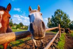 Funny horse close up Stock Photo