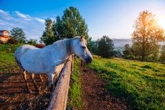 Funny horse close up Royalty Free Stock Photos