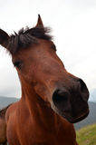 Funny horse face. A close up funny horse face Stock Images