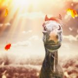 Funny horse face Muzzle with nose at autumn nature background with sunbeam Royalty Free Stock Photos
