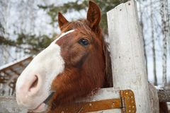 Funny horse face on a sunny spring day royalty free stock photo
