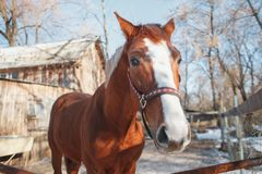 Funny horse face on a sunny spring day stock photos