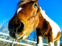 Funny Horse head Stock Image