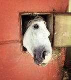 Funny horse looking at window Stock Photo