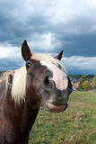 Funny horse Stock Images