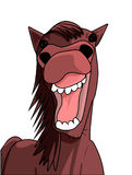 Funny horse smile Royalty Free Stock Image